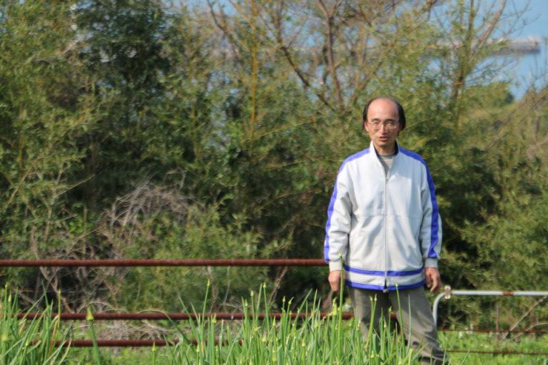 馬場さんの玉葱畑写真