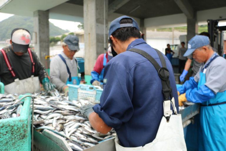 館山の漁港