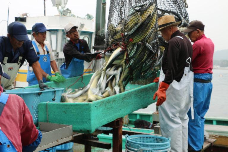 旬を穫る人、つなぐ人 鮮度にこだわる地魚の街 館山