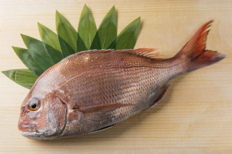 """""""當季""""魚 櫻鯛"""