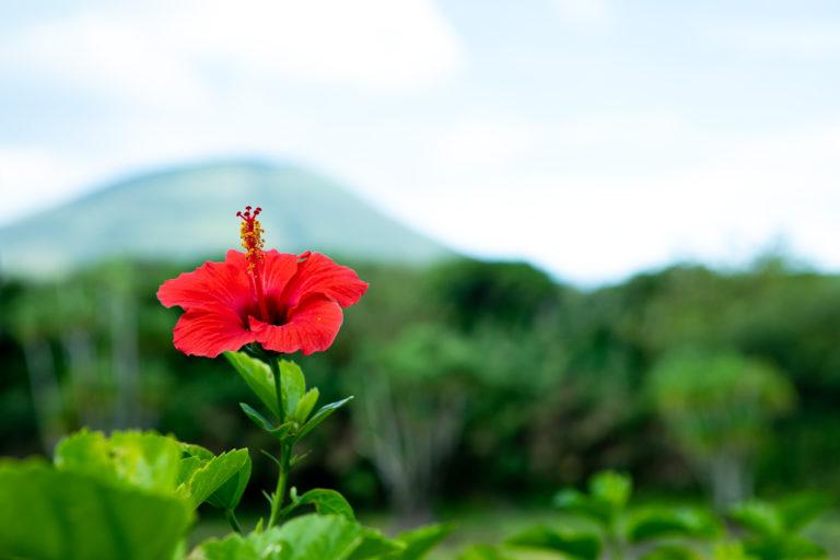 雄大な自然の恵みと、紡がれる島の歴史。 東京の離島、島しょ地域