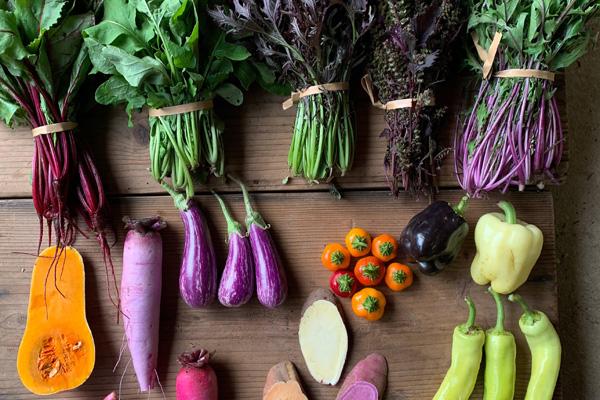 カラフルな野菜に込めた想い