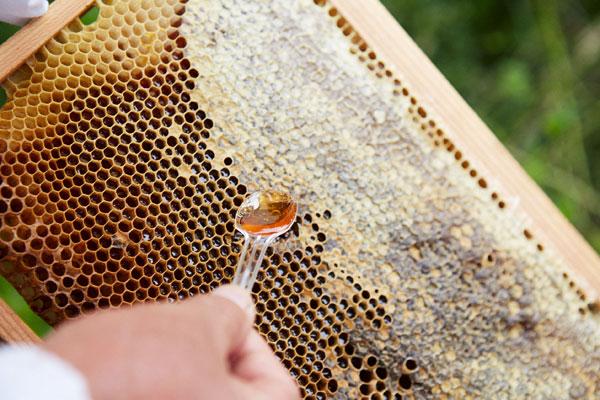 ハチミツ写真