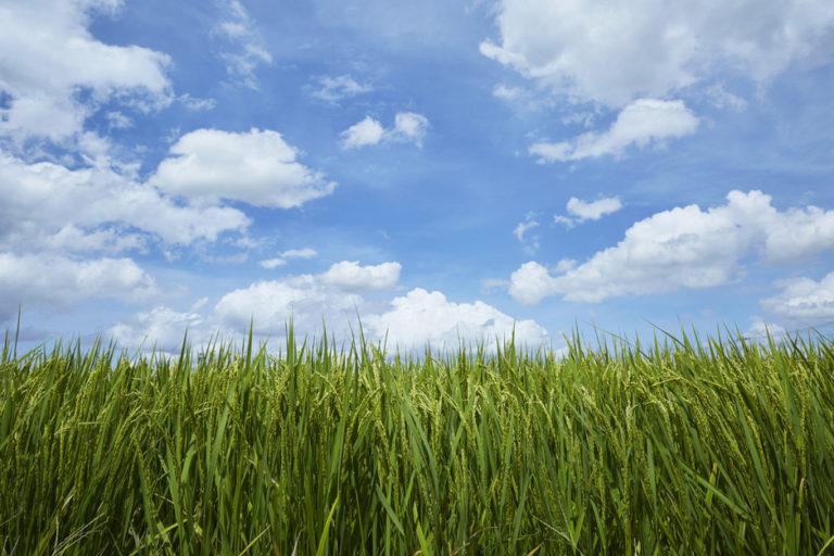 距東京都中心45km,備受自然恩澤的川島町農產品