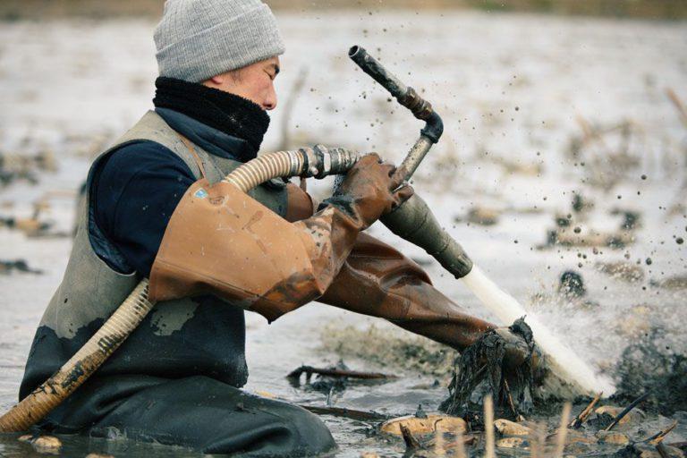 霞ヶ浦湖畔の広大な低湿地帯で育つ良質なレンコン
