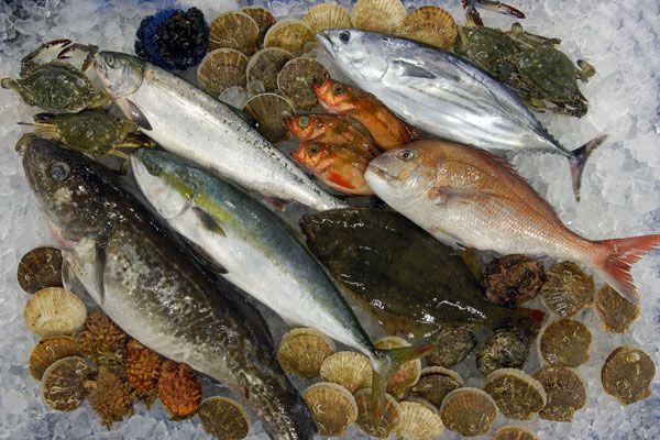 魚市場魚写真