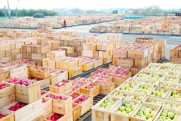 津軽りんご市場写真