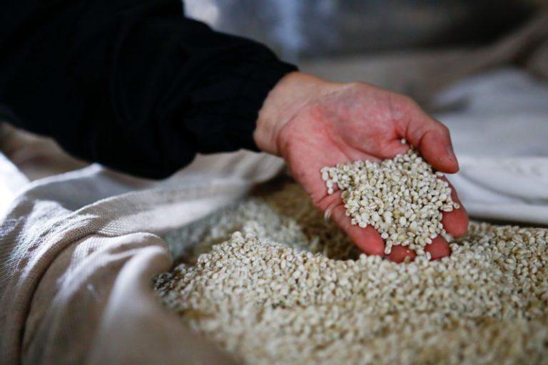 麦麹で仕込む焼酎