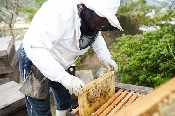 養蜂工程写真