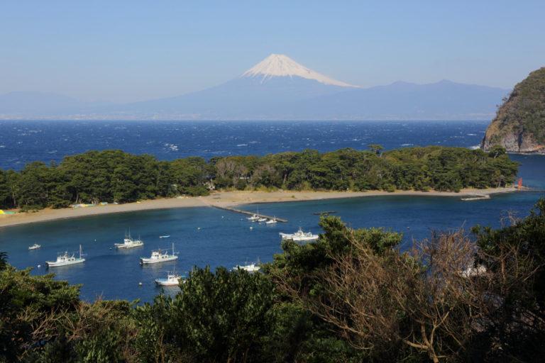 日本一深い湾で獲れる戸田の味覚 タカアシガニと手長エビ