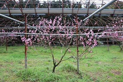 西田果樹園の風景写真