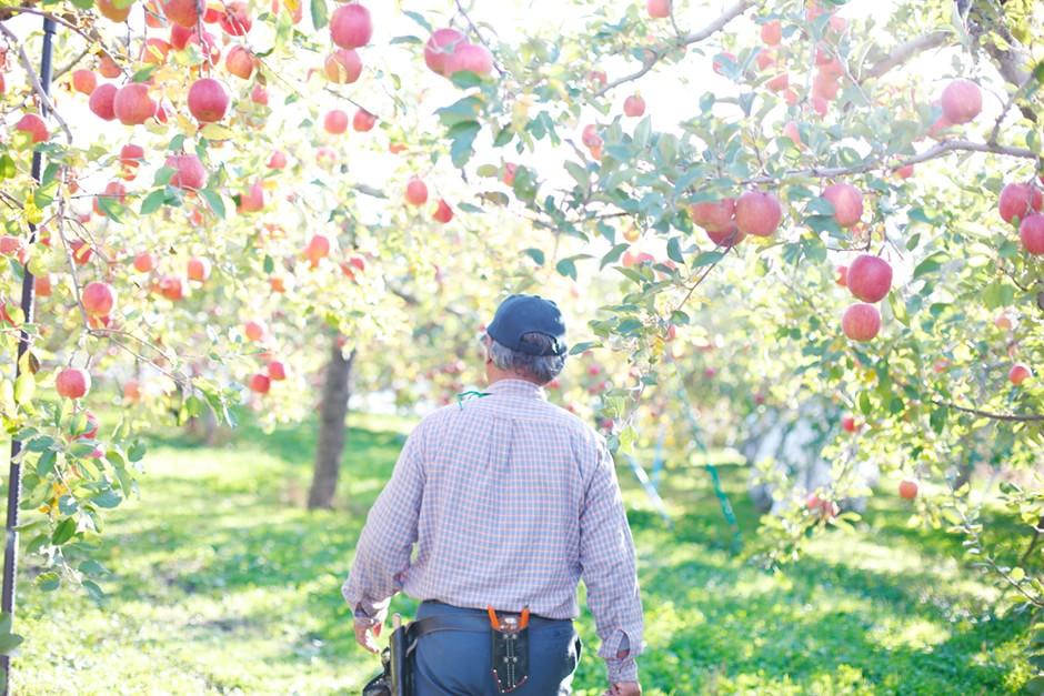 りんご果樹園写真