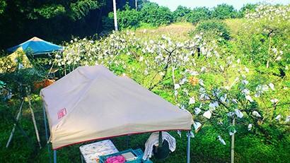 西田果樹園ピーチキャンプ写真