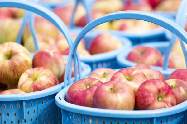 やまじゅうファームのりんご
