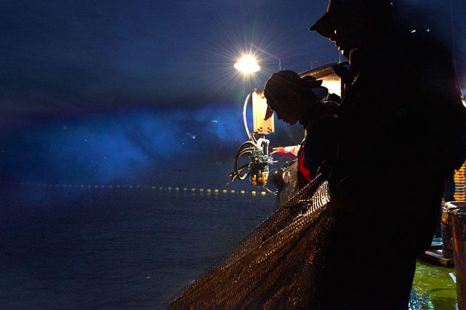 ホタルイカ漁写真