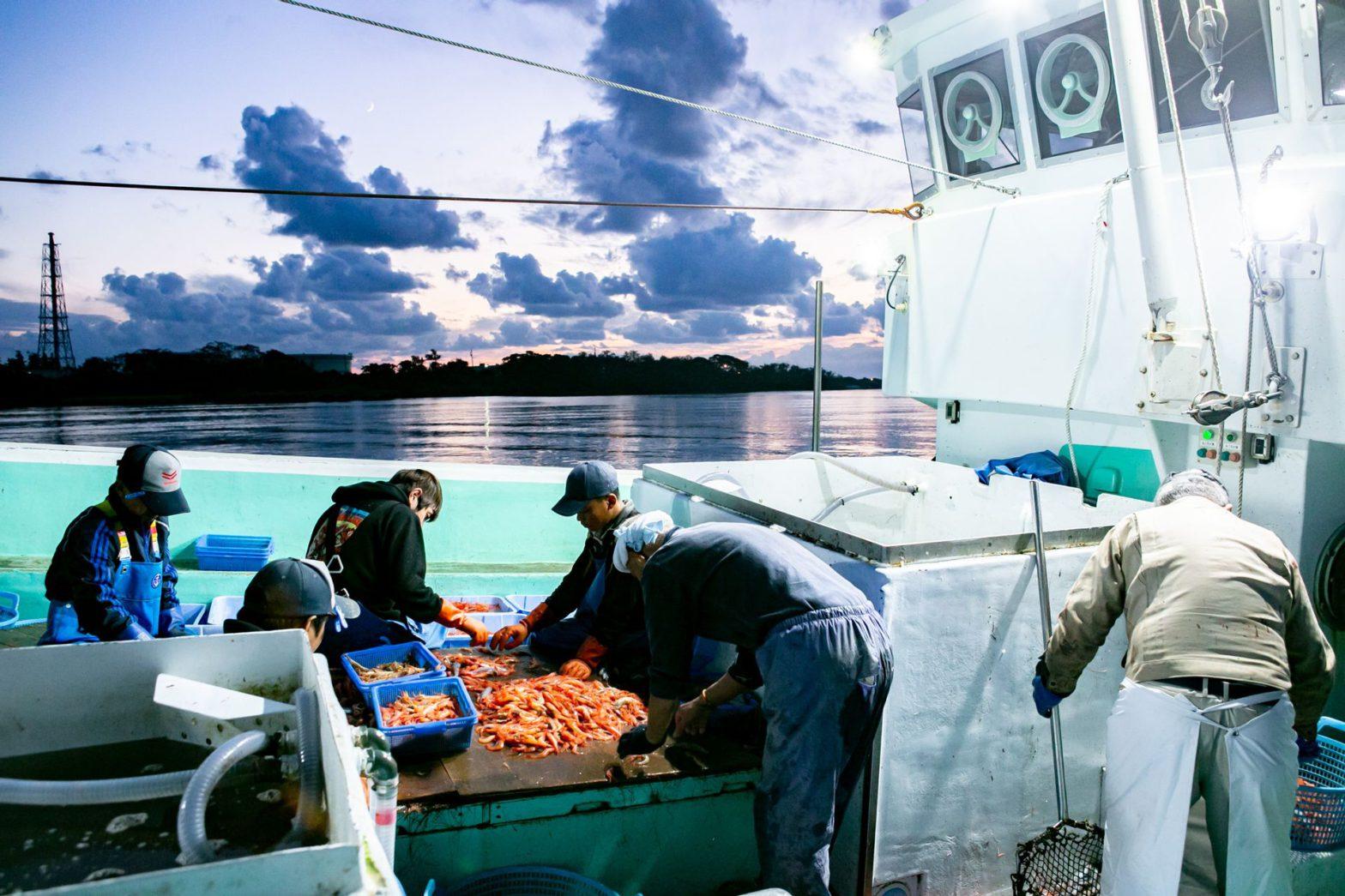 三国港に甘エビを水揚げする漁船