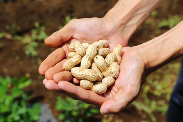 手の上のピーナッツ