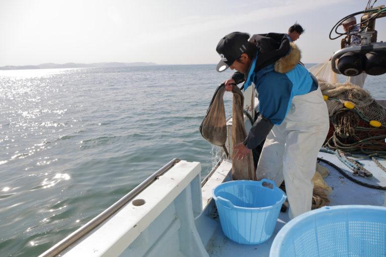 湘南しらす漁の様子