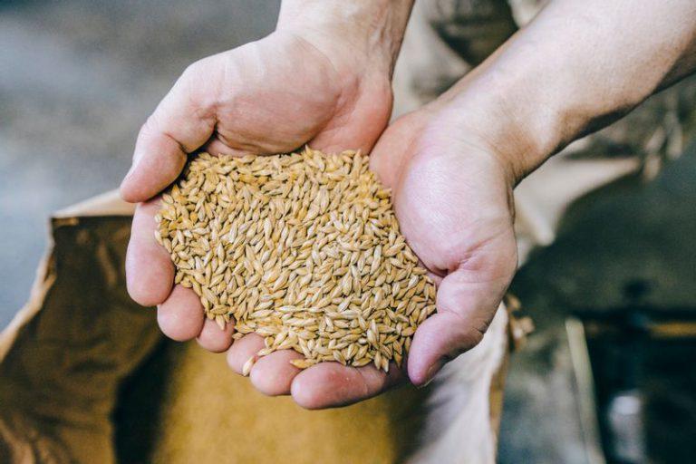 国産六条大麦